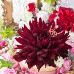 苺とカスタードクリームのムースケーキ・黒蝶ダリア