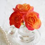 薔薇フリュイテ